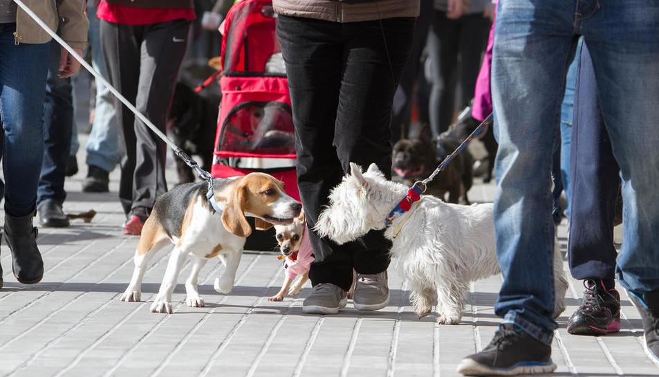 Una passejada de gossos en el certamen 'Bestial', el passat febrer.