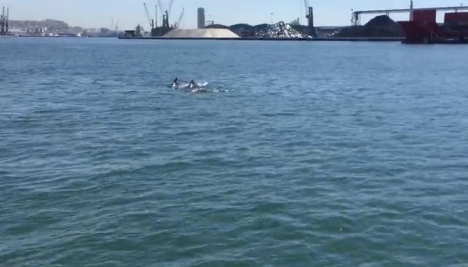 Avistament de dofins davant la costa de la ciutat de Tarragona.