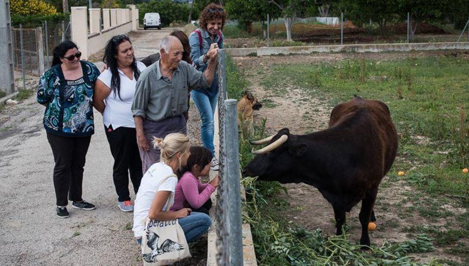 Un grup de persones visitant la Margarita, que és molt afable amb tothom.