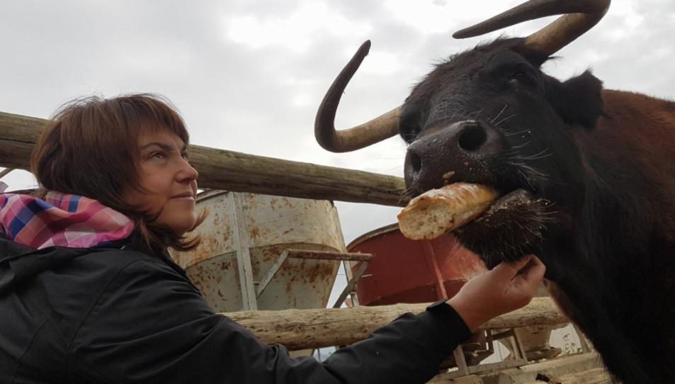 Moltes persones s'han mobilitzat per intentar salvar la vaca.