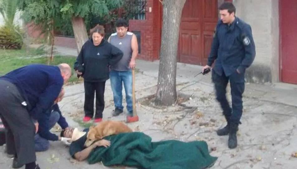 L'animal es va estirar sobre l'home ferit i no se'n va separar.