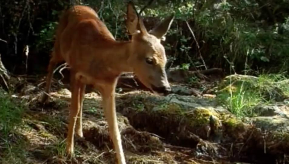 Un fotograma de la pel·lícula documental.