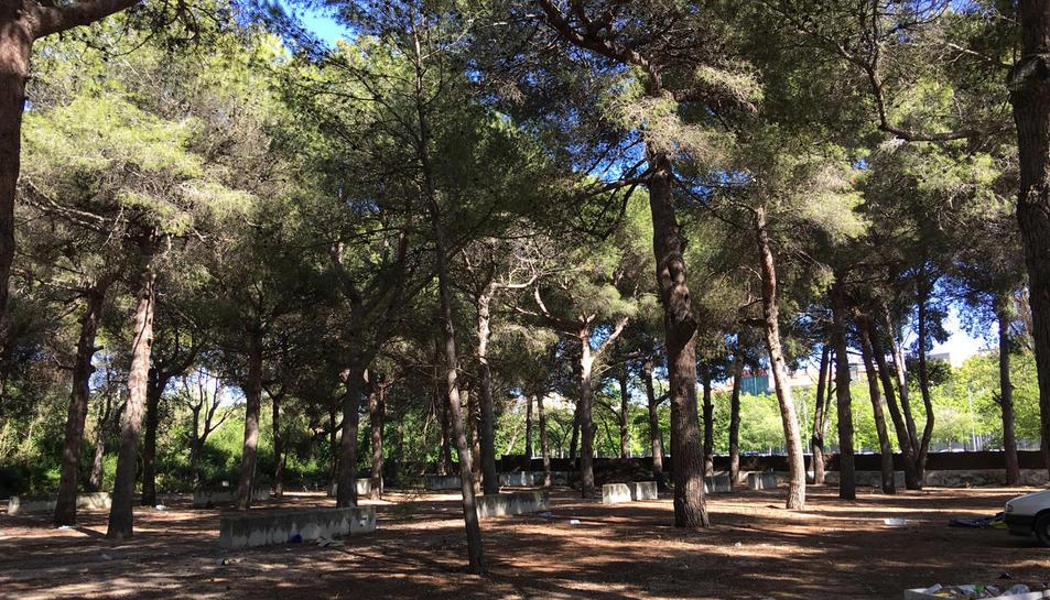 Imatge de l'antic càmpig El Buen Vino, on s'intal·larà un parc d'activitats a l'aire lliure.