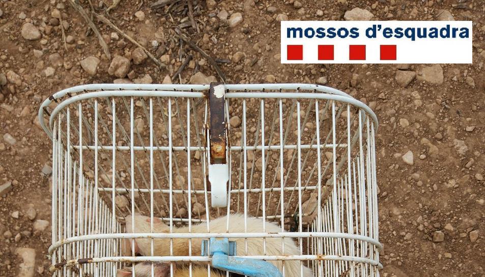 Fures dins d'una gàbia. Imatge del maig de 2017