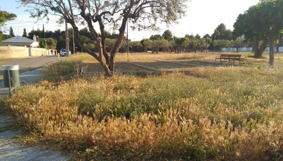 A la imatge, l'alçada de les herbes que hi ha al parc.