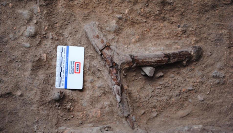 Fragment de banya de cérvol descoberta durant l'excavació, en molt bon estat de conservació