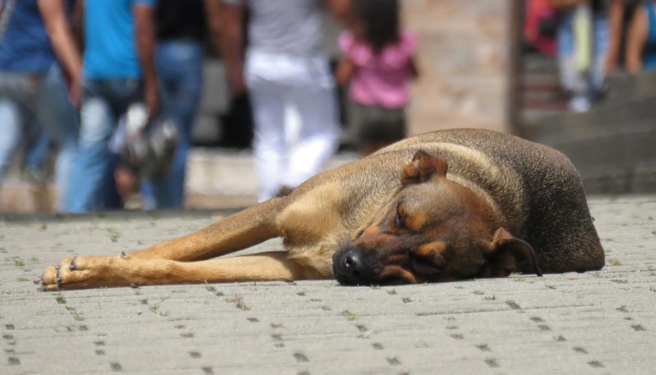 Algunes fonts del departament asseguren que es vol «donargarantiesals animals recollits i als seus propietaris».