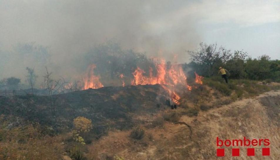 El foc ha cremat una zona de pins.