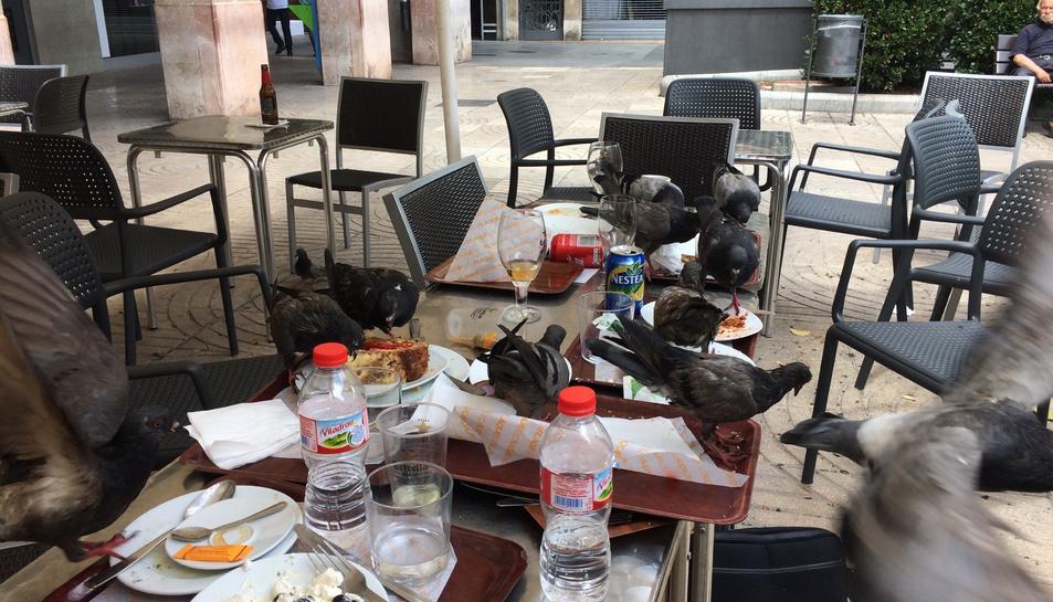 Imatge d'ahir al migdia a la plaça Prim, amb deu coloms a sobre unes taules, menjant-se les restes de diversos plats.