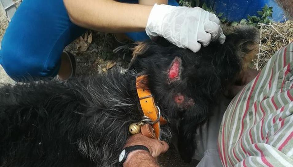 L'entitat es contrària al maltractament dels animals.