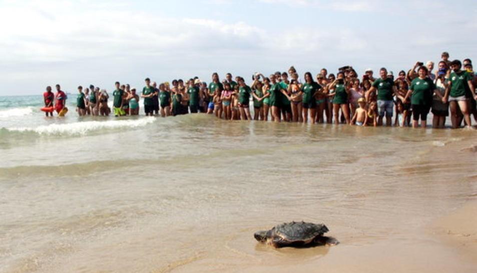Pla general d'una tortuga babaua endinsant-se a la Mediterrània enmig d'una gran expectació a la platja Llarga de Tarragona, el 31 d'agost del 2016.