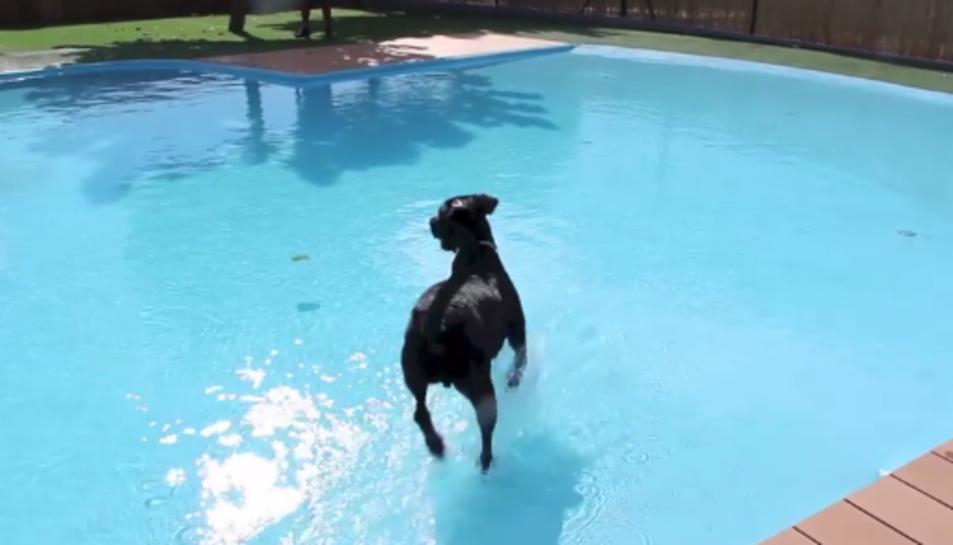 Un gos jugant al Sangulí.