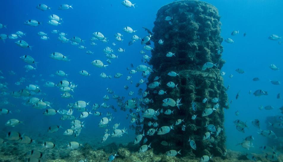 Ja són més de 100 els biòtops instal·lats al litoral tarragoní.