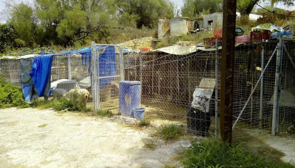 L'Ajuntament esperarà a que el propietari d'una gossera retiri els animals abans de fer-ho.