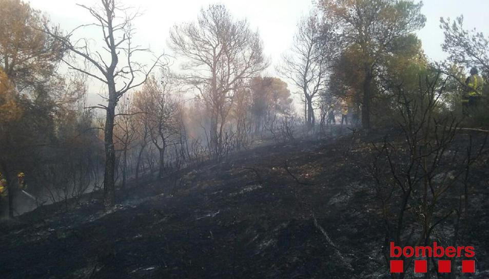 Va cremar prop d'una hectàrea d'una zona boscosa.