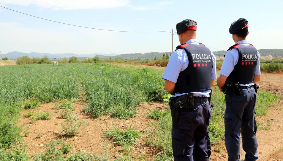 Pla general de dos agents dels Mossos d'Esquadra, d'esquena, davant d'un camp de calçots a l'Alt Camp, en un servei de patrullatge de prevenció a zones rurals, el 7 de juliol del 2017