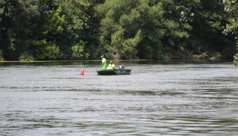 Dos operaris de manteniment del servei per a la navegabilitat de l'Ebre treballant prop de la zona del riu on s'ha detectat caragol maçana, a Miravet.