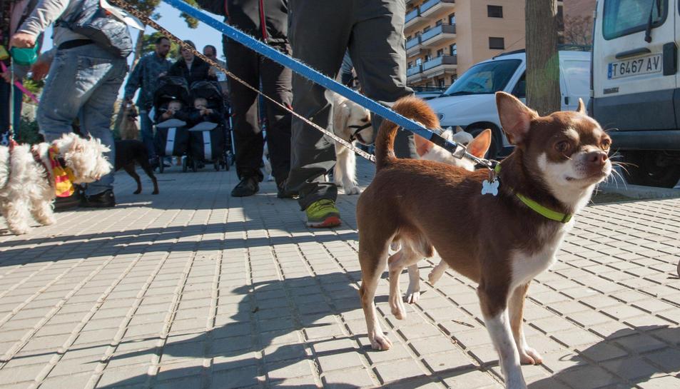 Imatge d'arxiu de diversos gossos passejant pels carrers de Reus.