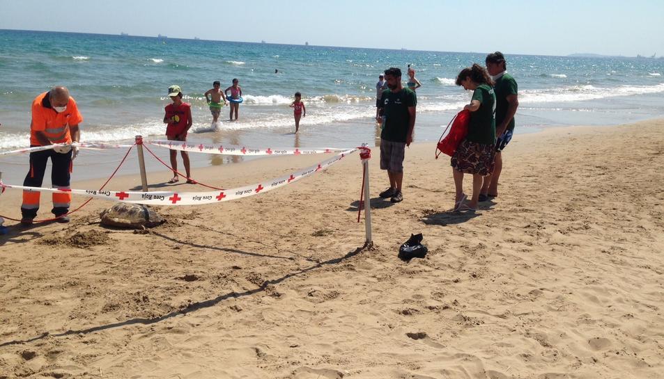 Els socorristes van acordonar la zona perquè ningú toqués el cos de la tortuga fins l'arribada dels tècnics.