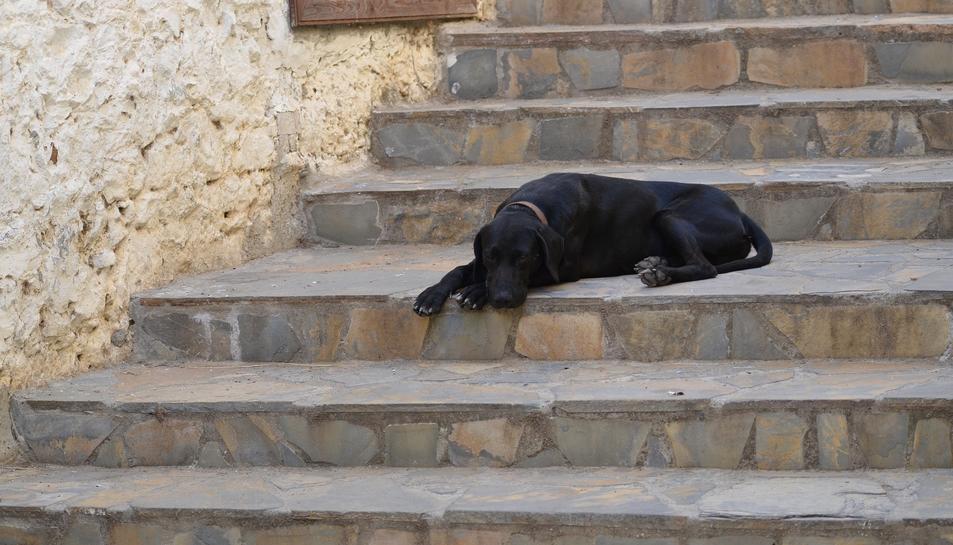 L'ordenança municipal estableix els drets i els deures dels propietaris d'animals de companyia.