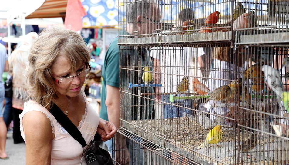Una dona observa uns ocells en el punt de venda que Joan Roig té, des de fa molts anys, al mercadet de Bonavista.