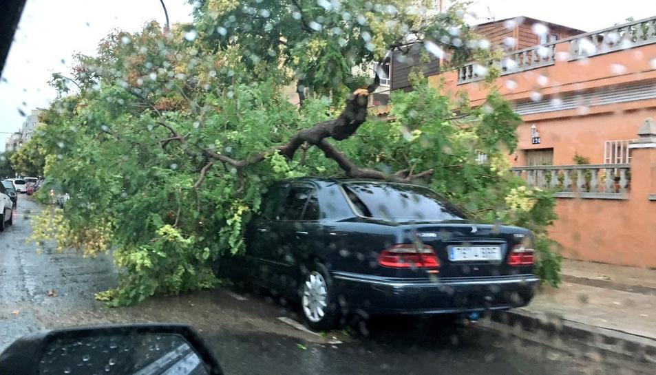 El vent ha provocat caigudes d'arbres i danys en mobiliari i vehicles a Reus.
