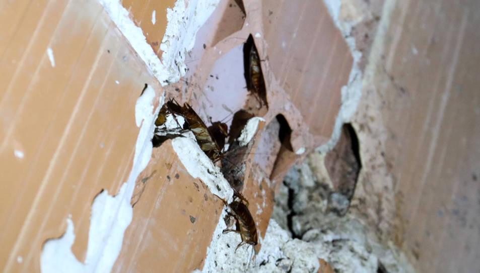 Detall d'un dels nius que les paneroles han fet dins d'un edifici.