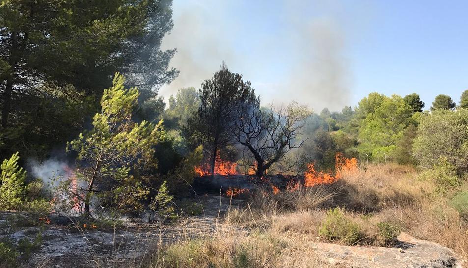 El foc calcina massa forestal.