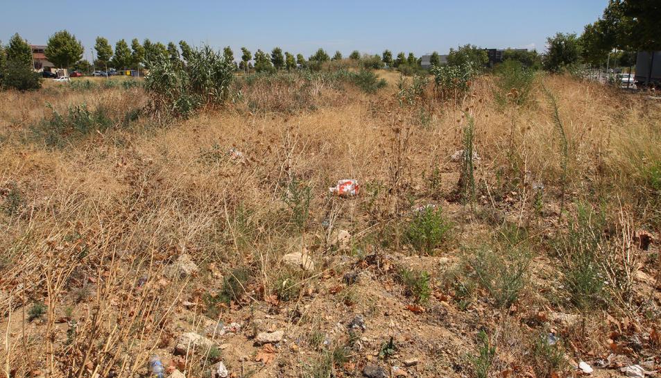 Un solar al Tecnoparc on s'acumula vegetació i brossa.