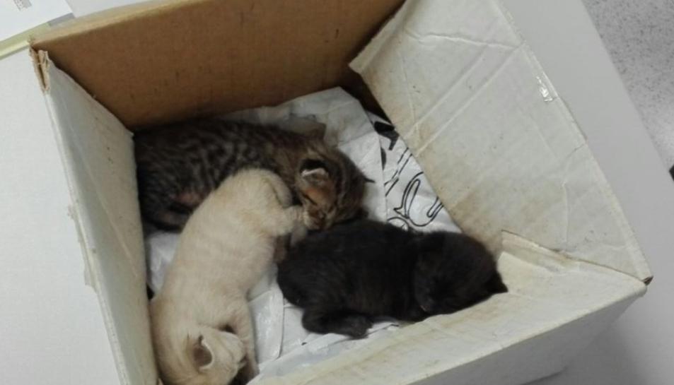 Els gats van ser abandonats en una caixa de cartró.