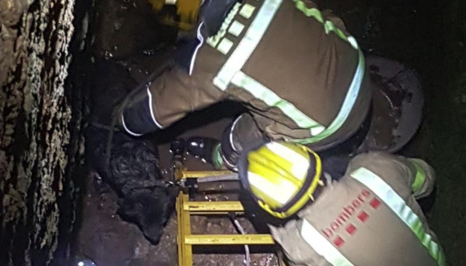 Dues dotacions de Bombers van efectuar el rescat dels animals.