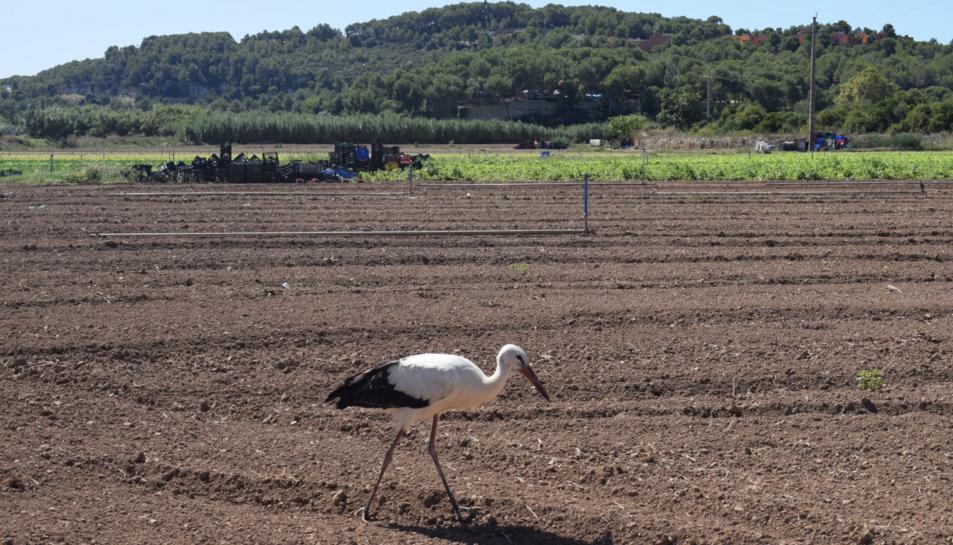 L'ocell a la zona d eles hortes de Ferran.