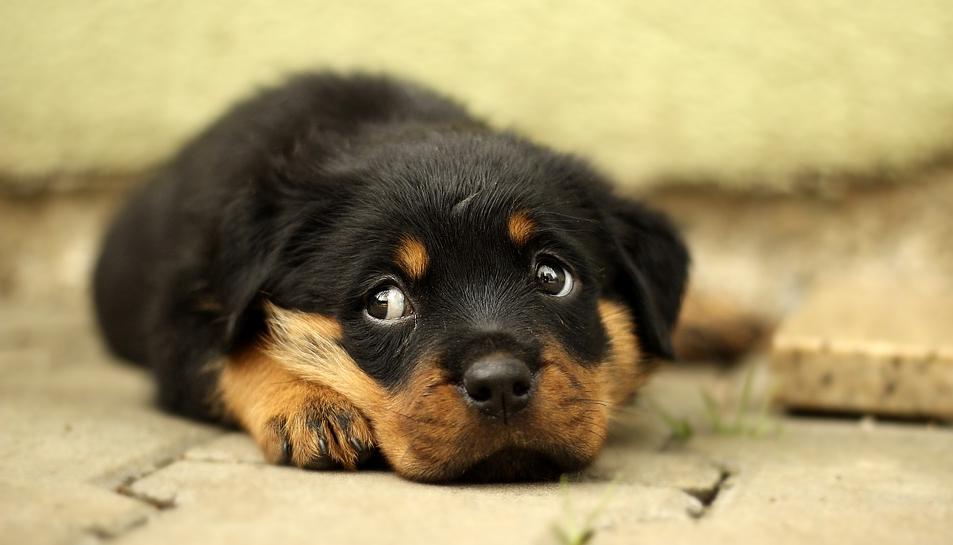 Les denúncies per maltractament animal formen part del treball diari deDAZ.