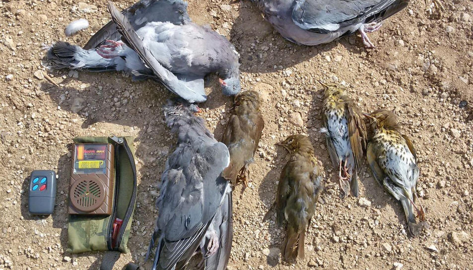 Les peces comissades al caçador que utilitzava un reclam electrònic.
