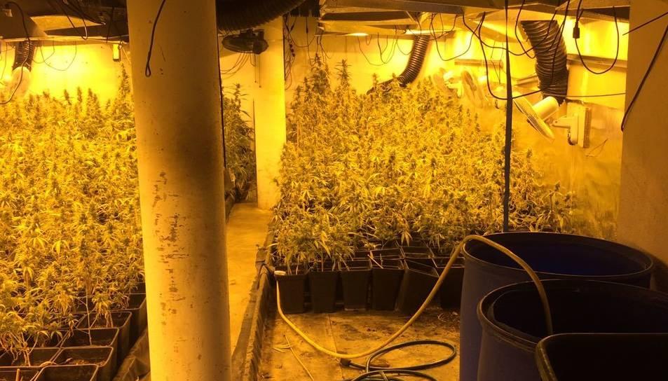 Instal·lació amb la plantació de marihuana a l'habitatge assaltat a Vilafortuny.