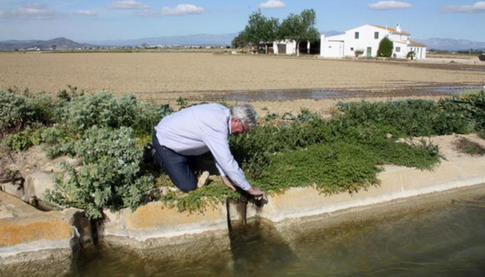 El president de la comunitat de regants de la Dreta de l'Ebre, Manel Masià, obrint el pas de l'aigua a un camp d'arròs.