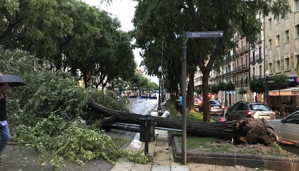 Una dels arbres que ha caigut a la rambla Nova de Tarragona a causa de la tempesta.