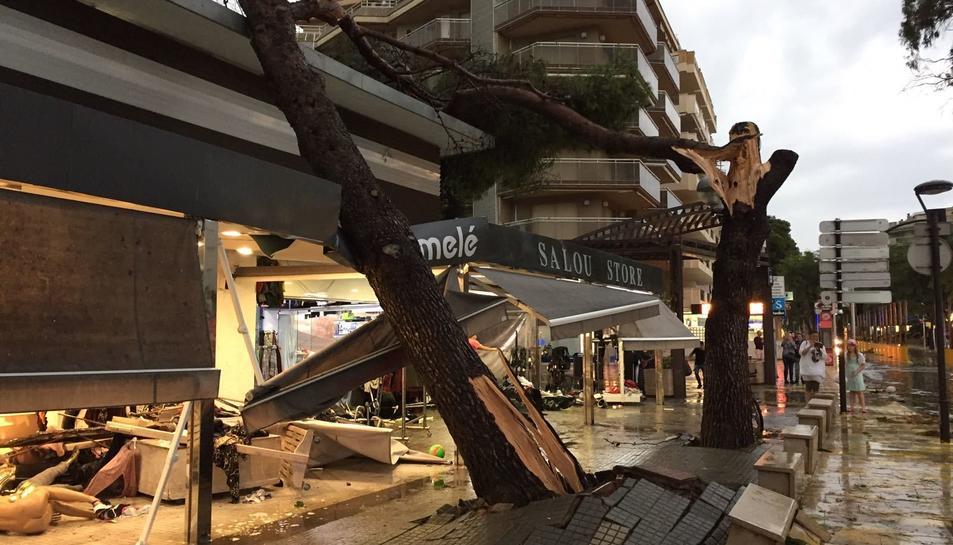 Un arbre caigut a sobre d'un comerç al carrer Carles Buigas de Salou