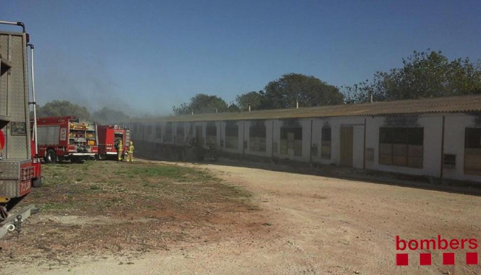 L'incendi es va produir quan no hi havia animals dins la granja de pollastres.