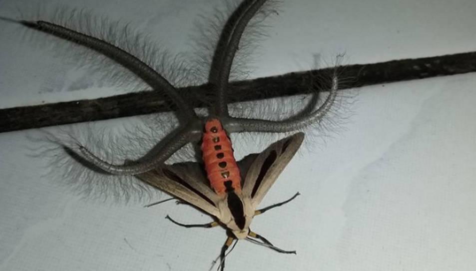 El vídeo de l'insecte no ha tardat en fer-se viral.