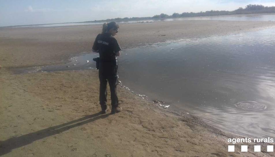 La pujada de temperatura de l'aigua i la falta d'oxigen en una zona on l'aigua s'estanca serien les causants de la mort dels peixos.