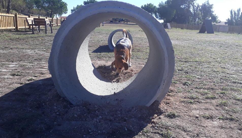 El parc caní està equipat amb un circuit d'agility on els gossos poden entrenar o jugar.