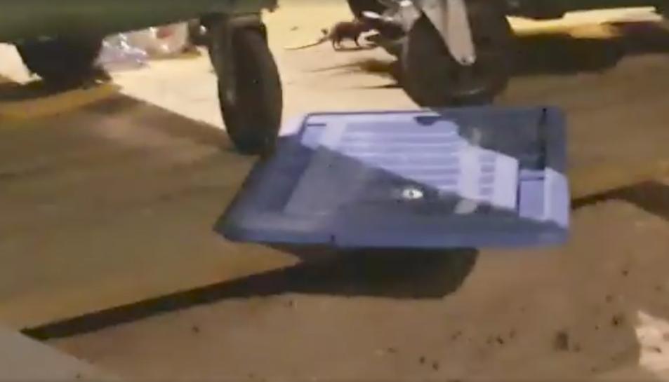 Captura d'un vídeo d'un veí amb una rata a la part superior.