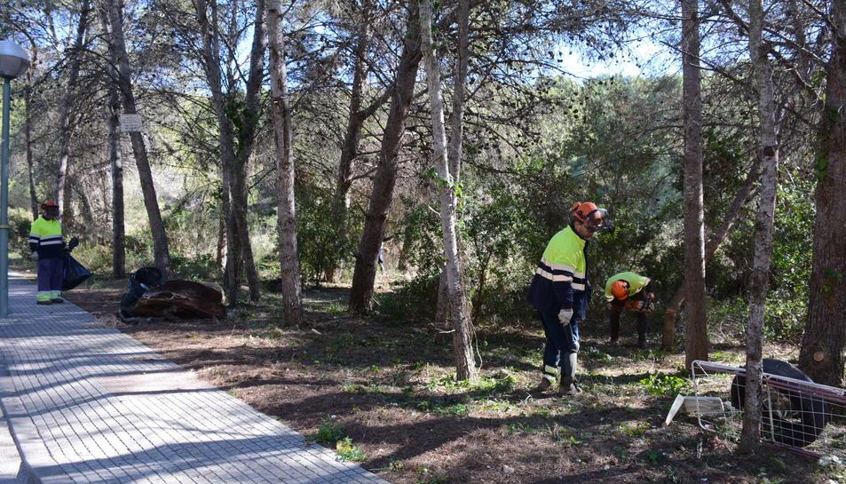Imatge dels treballs de la neteja forestal a la Móra.