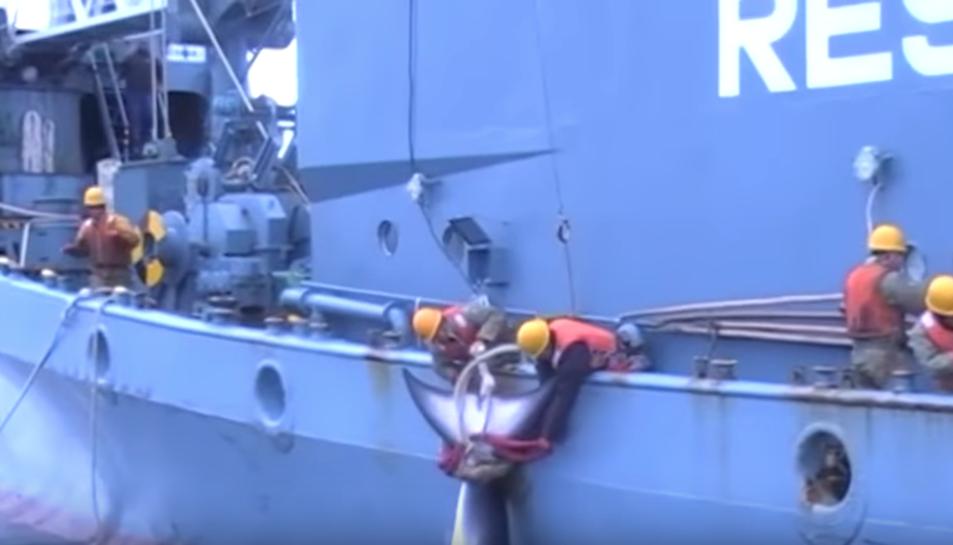 Imatge del vídeo que ha difós Sea Shepherd gravat pel Govern australià.