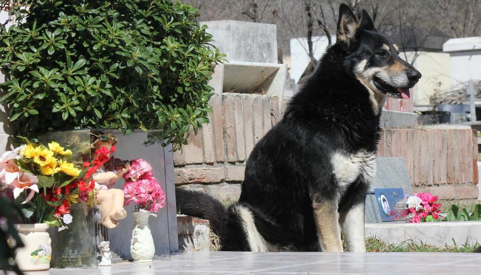 «Mai he vist quelcom tan fidel», explica Marta Clot, florista del cementiri.