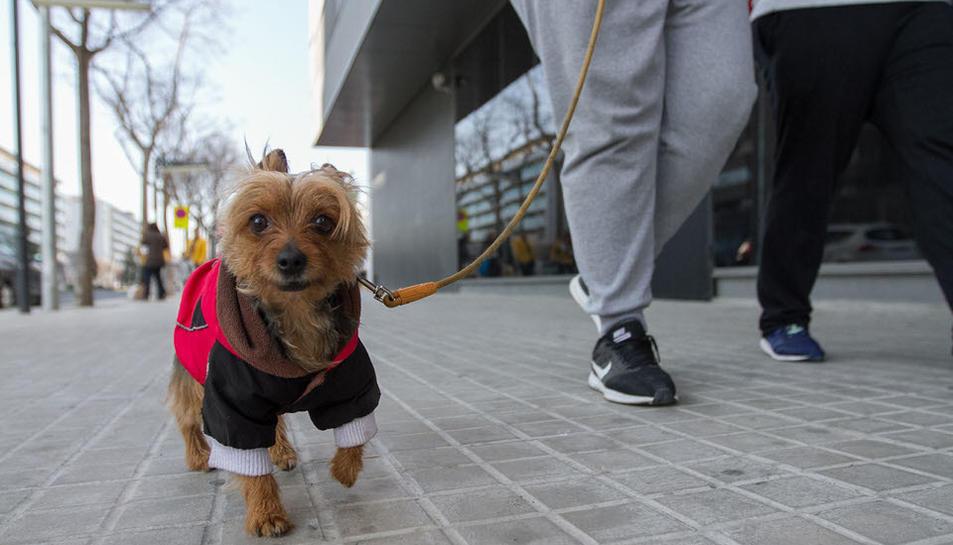 Imatges de la passejada canina de Reus