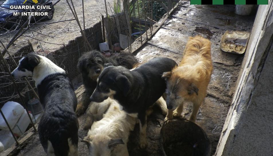 Els gossos viven amb el seu propietari i la seva mare, anciana, en males condicions.