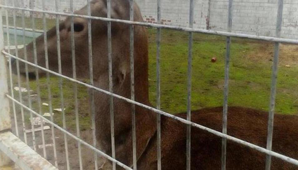 FAADA i Hogar Animal Sanctuary han iniciat una campanya per recaptar diners per al seu trasllat.