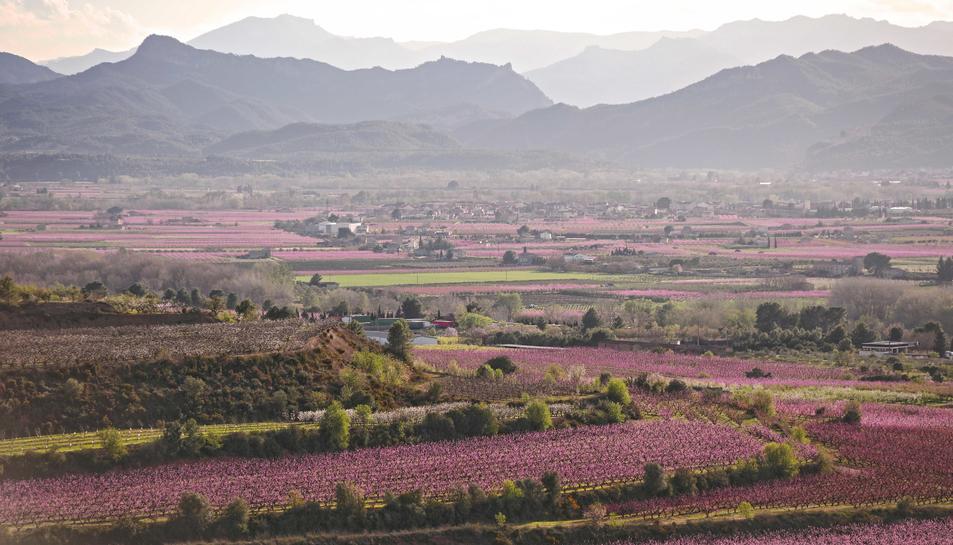 La Ribera d'Ebre en flor, en una imatge de l'any passat.